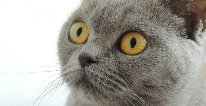 cat-179842_1920
