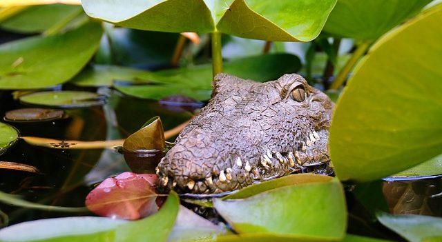 krokodýlí ZOO