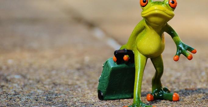 frog-897418_1280